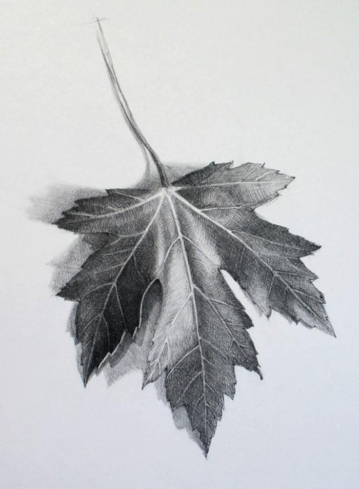 modèle de dessin débutant facile à reproduire, comment dessiner une feuille à effet réaliste aux crayonx noir et gris