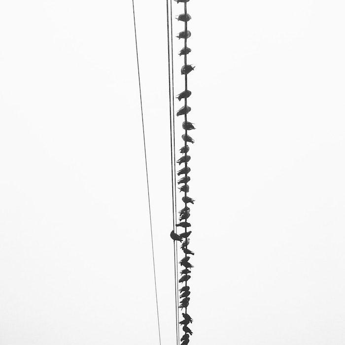 Oiseaux sur fil image noir et blanc, photo gratuite à utiliser comme fond d'écran