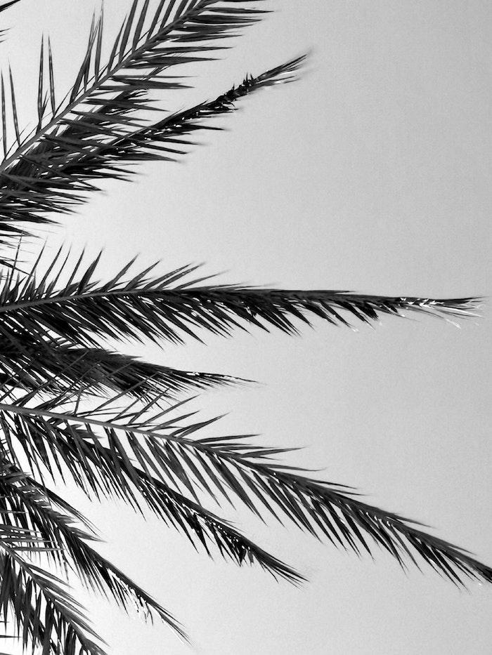 Palme feuilles dans le ciel, photo noir et blanc, peinture monochrome chic pour écran