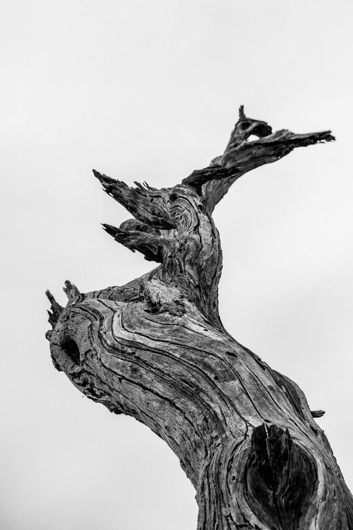 Arbre sec image fond ecran nike, le plus beaux fond d'ecran noir et blanc photographie