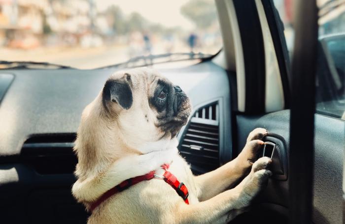 le nécessaire pour un voyage en voiture avec son chien, idées produits de sécurité pour voyage en voiture animaux