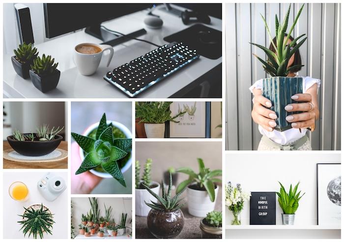 Aloe Vera plante pour chambre, quelle est la meilleure plante d'intérieur purifiante l'air