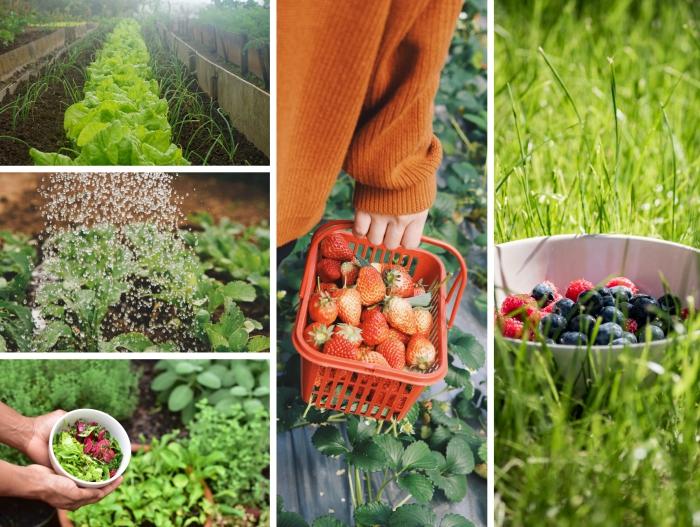 cultiver ses légumes et fruits dans son propre jardin, tendances jardinage 2020 aménagement paysager comestible