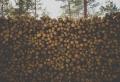 Chauffage au bois : Vraie tendance ou effet de mode ?