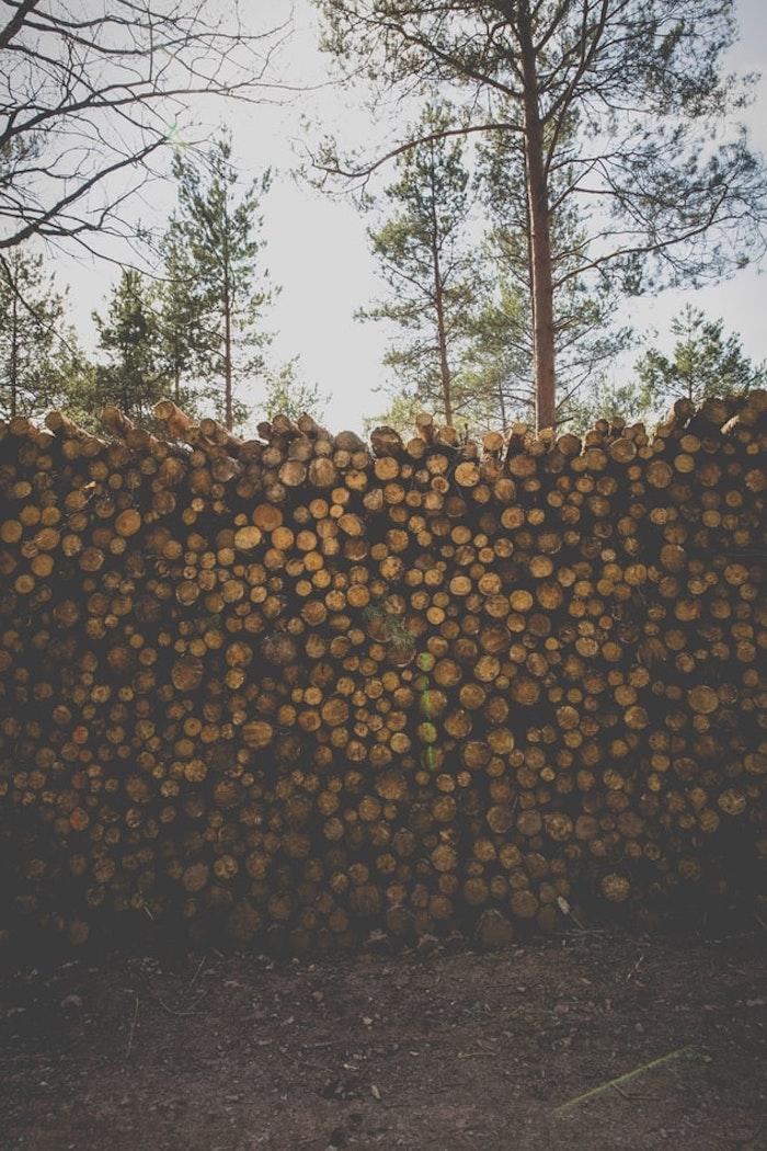 buches du bois situés dans le cour, grands arbres en arrière