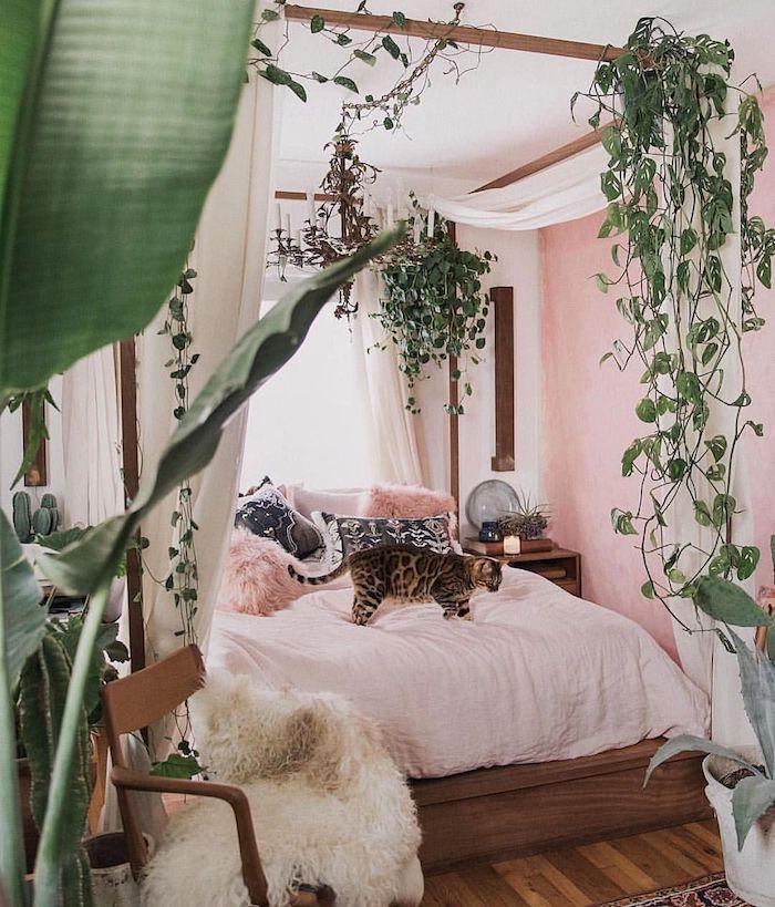 Roses murs, grand chat sur le lit, lierre plantes grimpantes, dépolluante chambre, inspiration déco plante d'intérieur
