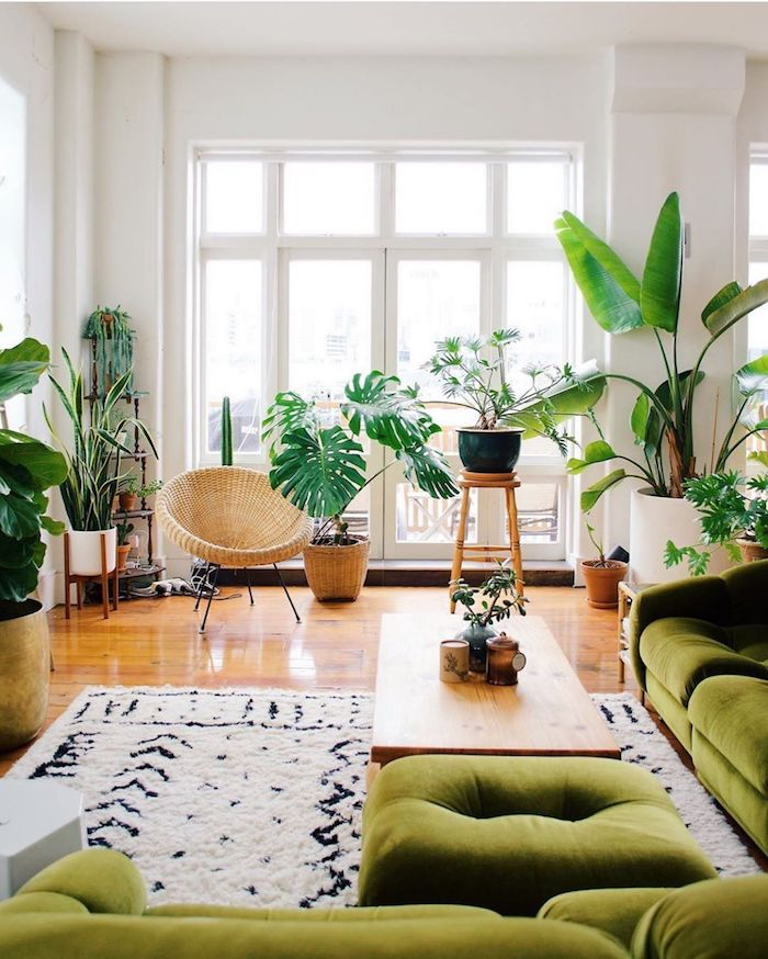 Canapé verte en angle, belles plantes d'intérieur, la meilleure plante verte pour la salle de séjour exotique style