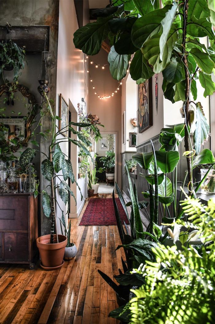 Lampes en guirlande lumineuse, plante verte intérieur exotique déco stylée, arrosage plante d'appartement déco 2020