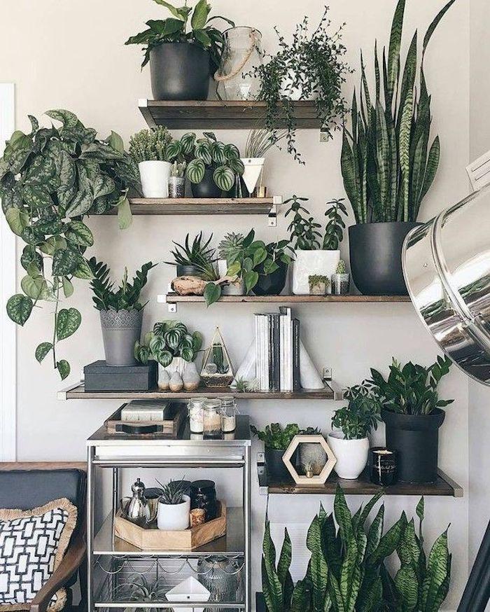 Étagères avec plantes vertes, idée comment ranger toutes les plantes d'intérieur hautes et basses, plante dans une chambre bohème déco