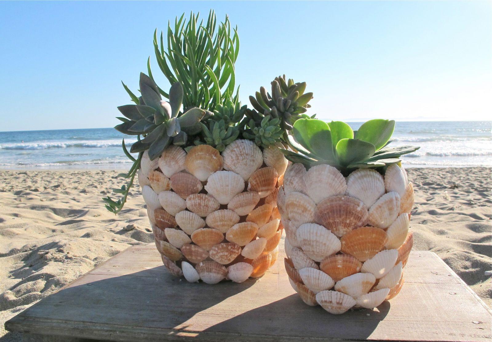 decorer un pot de terre de coquilles de mer marron et blanc avec succulents a l interieur, bricolage coquilles de mer simple