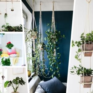 Suspension pour plante : le guide complet pour l'adopter chez soi