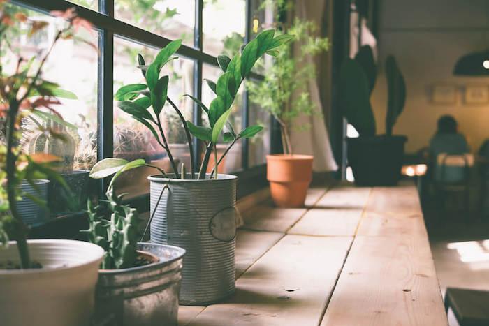 Fenetre lumière du jour, plante interieur dépolluante, plante d'intérieur haute verte, pot avec plantes