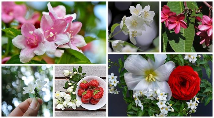 Jasmine beauté couleurs d'été, idée plante à garder dans sa maison, plante verte intérieur, chambre à coucher quelle plante choisir