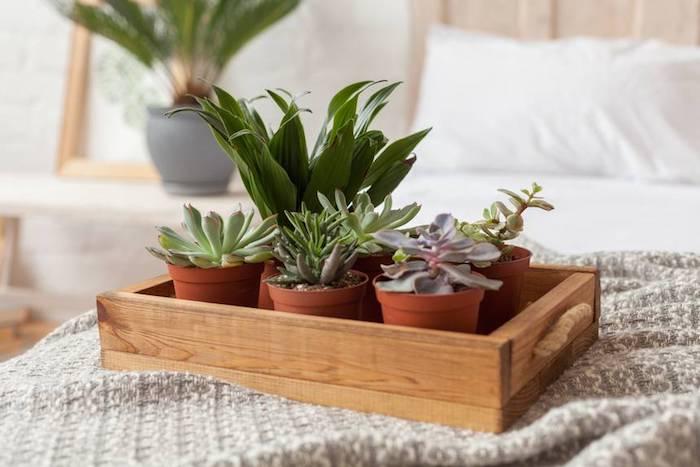 Boite en bois pleine de petits pot vertes, plante pour chambre, choisir sa plante verte intérieur, petit cactus et aloe vera