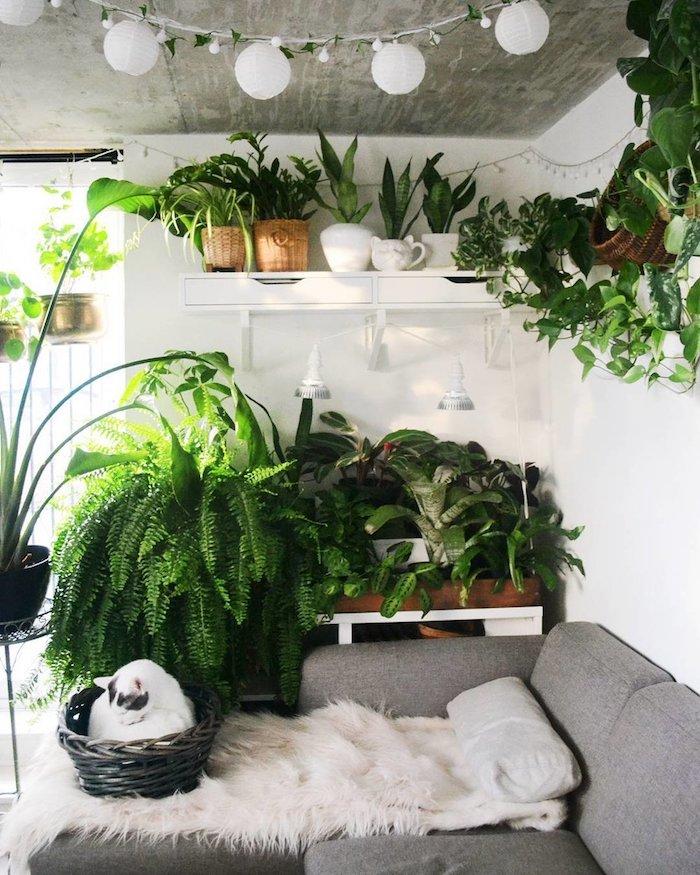 Étagère avec plantes vertes d'appartement, tendance plante chambre deco exotique, guirlande lumineuse, chat en basket