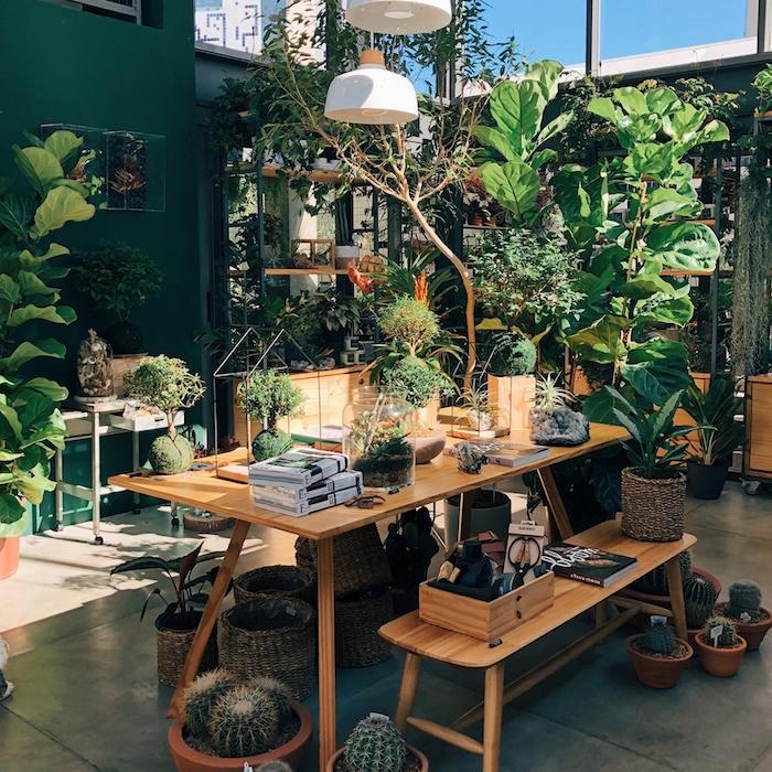 Table longue en bois chambre boheme chic, plante pour chambre style bohème, grands fenetres, lumiere du sol