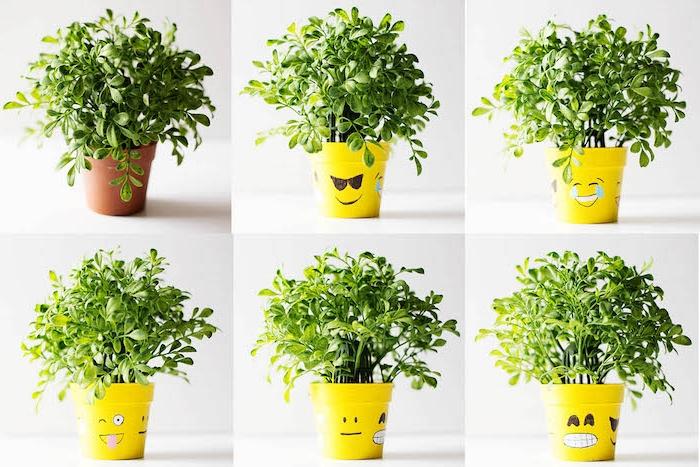 customiser un pot de fleur motif emoji dessiné avec feutre noir sur surface support jaune, plante verte exterieur