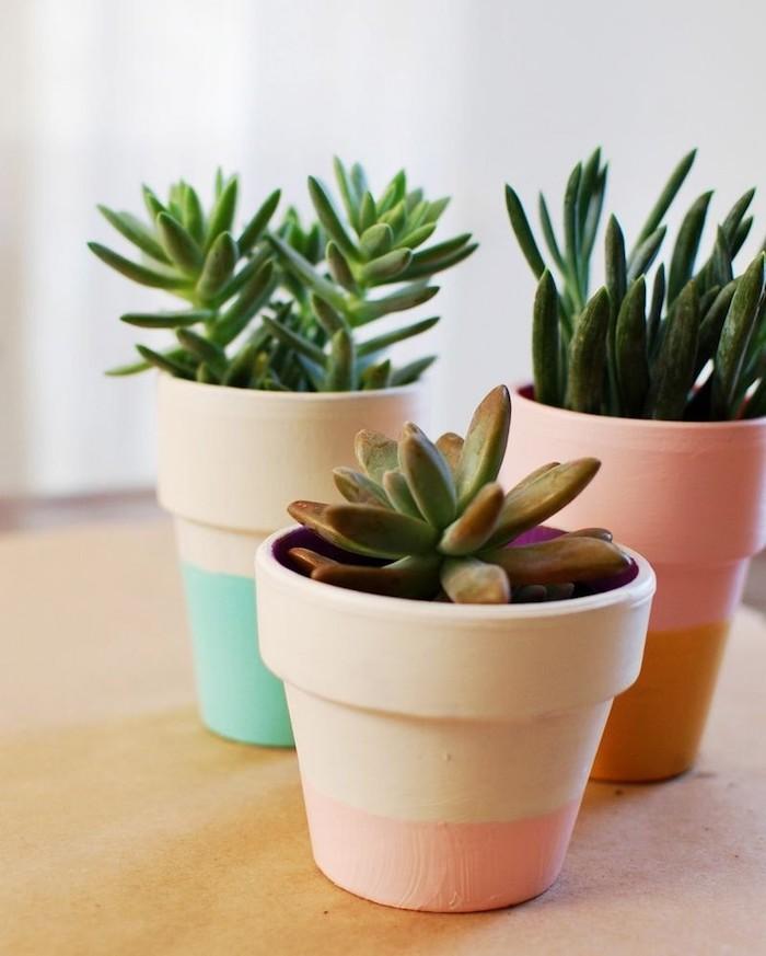 pot de fleur customisé de couleur pastel sur surface blanche et plante grasse a l interieur de pot, comment peindre effet ombré