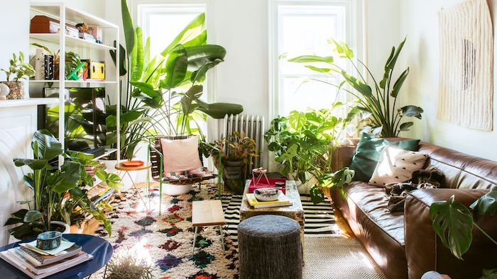 Salon originale déco avec beaucoup de plantes dépolluantes, deco jungle chambre boheme chic