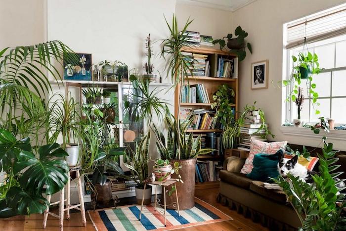 Étagères et bibliothèque avec livres et plantes vertes, idée plante chambre boheme chic, plante d'intérieur dépolluante,