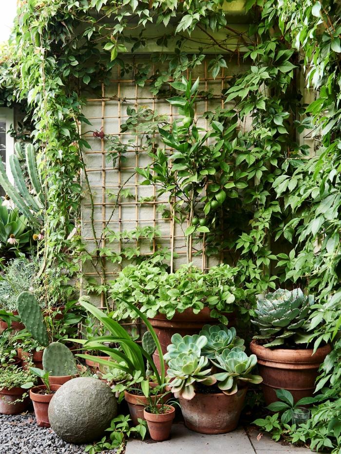 Plantes vertes cactus et aloe, cool idée comment aménager sa terrasse avec plantes, jardin simple verte