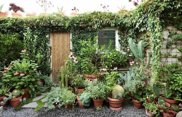 Vertes plantes, cactus et fleurs décoration jardin extérieur, les plus belles décoration de jardin
