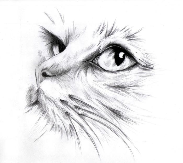 exemple comment réaliser un dessin de chat réaliste au crayon, modèle de dessin de tête de chat réaliste