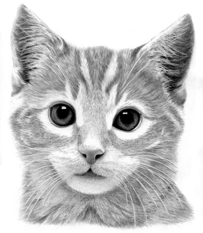 exemple de dessin de chat mignon en blanc et noir, apprendre le dessin au crayon, idée dessin animal de compagnie