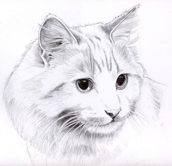 exemple de dessin de chat facile au crayon, apprendre à dessiner au crayon, modèle de dessin blanc et noir réaliste