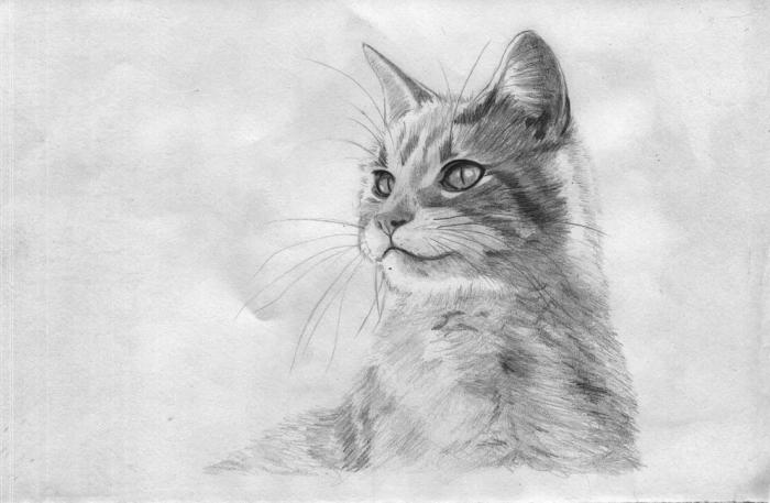 réaliser un dessin de chat réaliste au crayon, modèle de dessin au crayon réaliste à motif animal de compagnie en blanc et noir