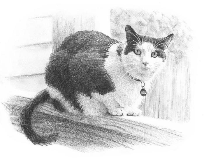 modèle de dessin chat noir réaliste au crayon, dessin animal de compagnie dans un jardin en blanc et noir