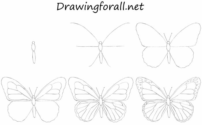 comment dessiner un papillon, idée coloriage papillon beau motif etape par etape