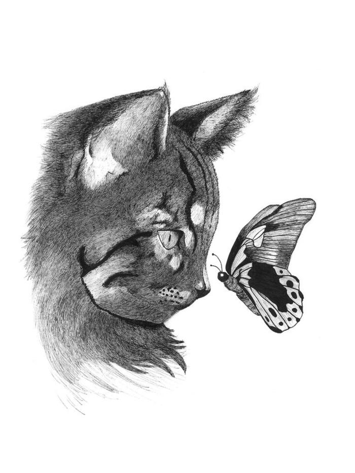 Chat et papillon adorables coloriage papillon, dessin chouette de papillon beau couleur