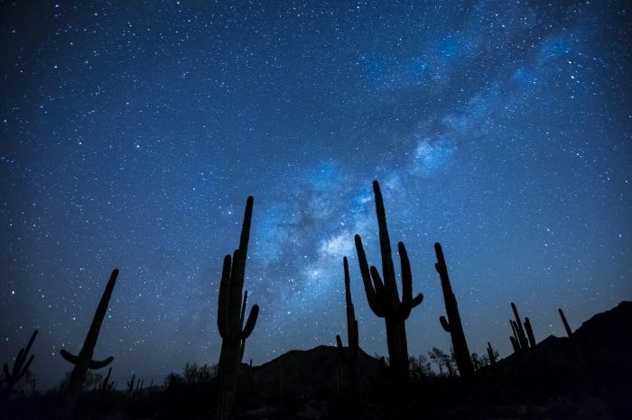 idée de fond d écran gratuit pour ordinateur, photographie de gros cactus dans le désert sous le ciel bleu étoilé