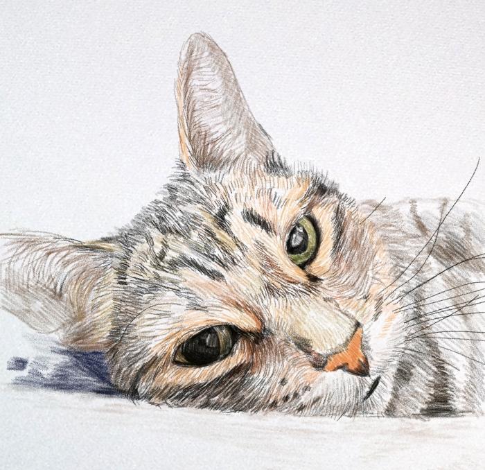 exemple de dessin d'animal en couleurs mignon, idée comment faire une tete de chat dessin au crayon pour pros