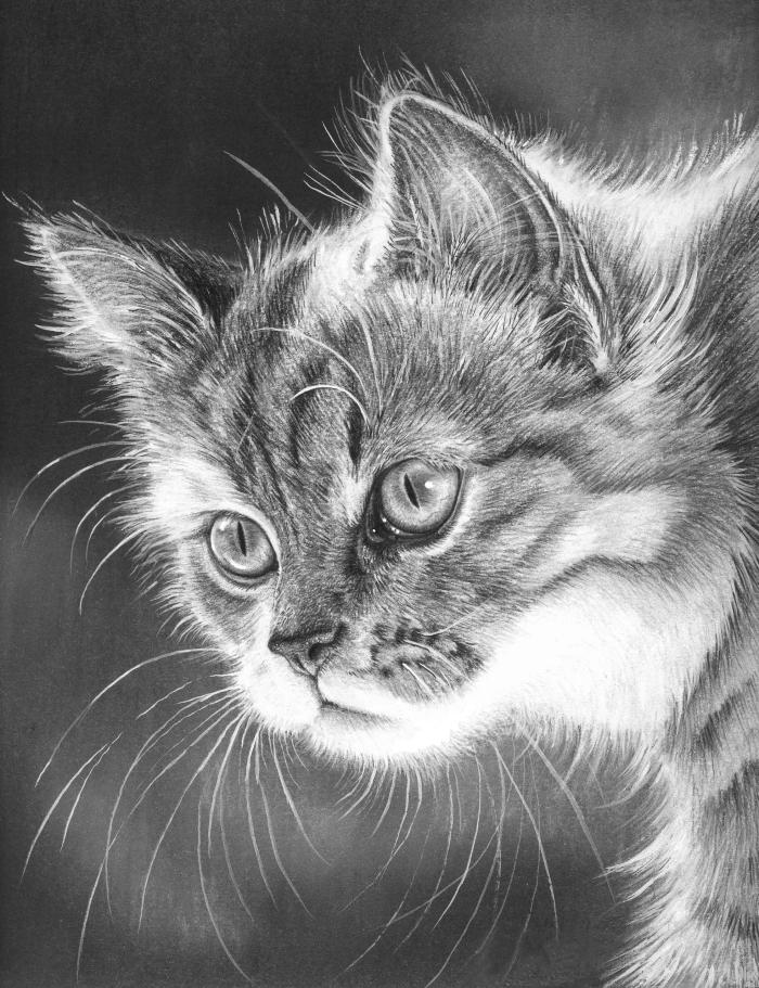modèle de dessin tete de chat réaliste au crayon, exemples de dessins au crayon à motifs animaliers pour pros