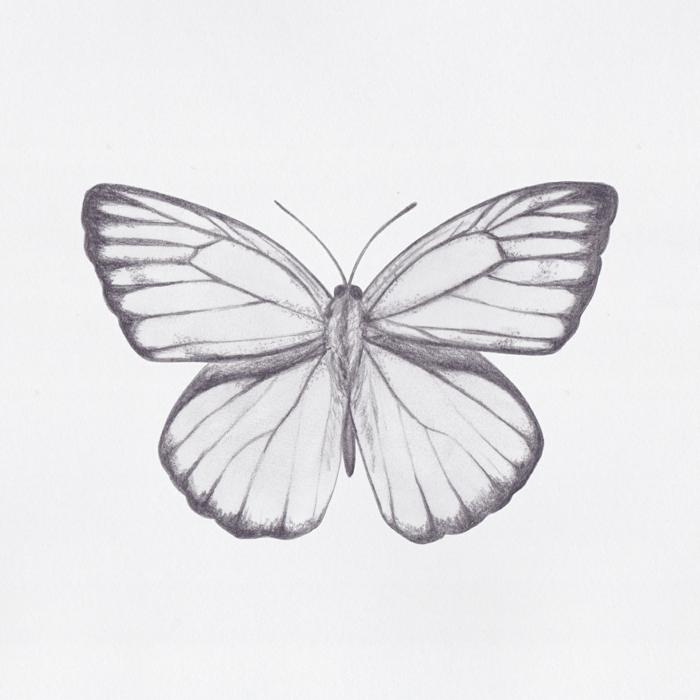 Crayon dessin papillon facile avec beaucoup de détails, image pour s'inspirer dessins papillons