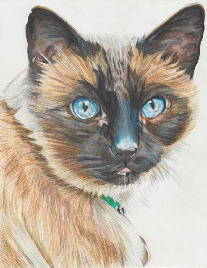modèle de dessin de chat au crayon et en couleurs, idée pour réaliser un dessin réaliste de chat aux yeux bleus