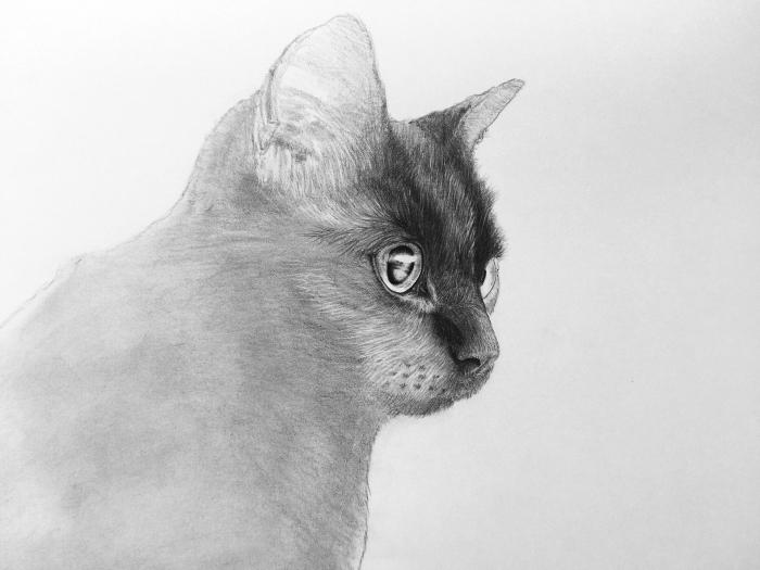 apprendre le dessin au crayon, exemple comment faire un dessin de chat facile avec crayon en blanc et noir
