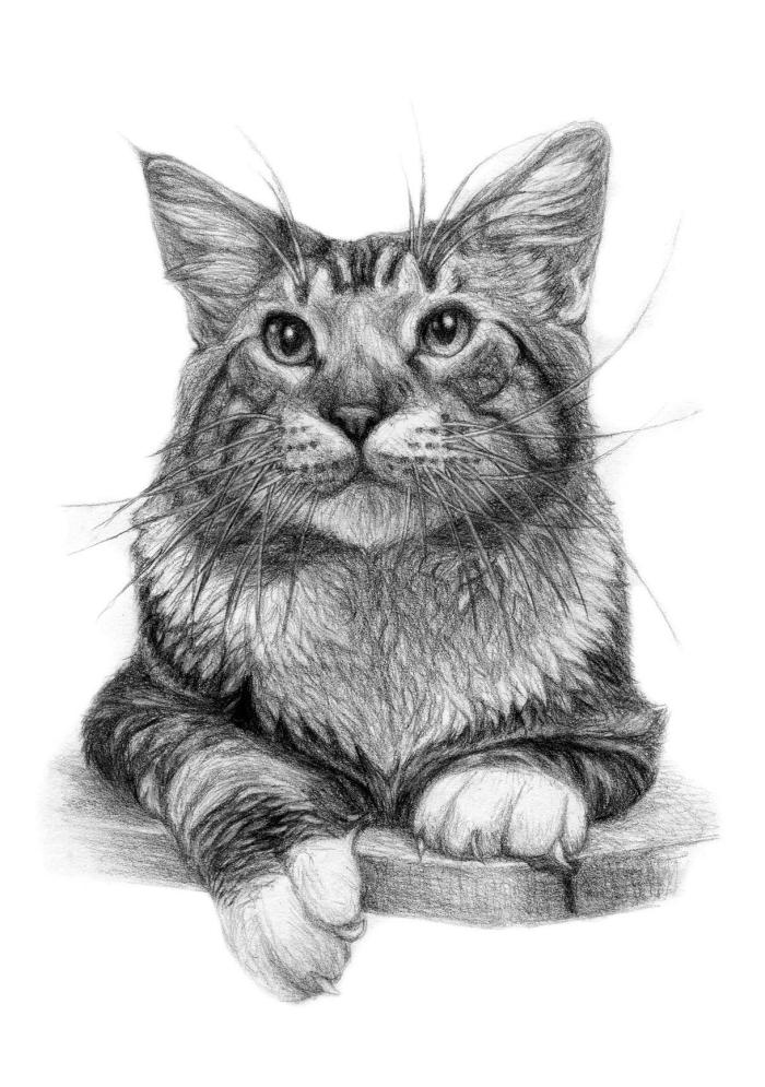 apprendre à réaliser un dessin chat noir, exemple de dessin réaliste au crayon d'un chat assis aux moustaches longues