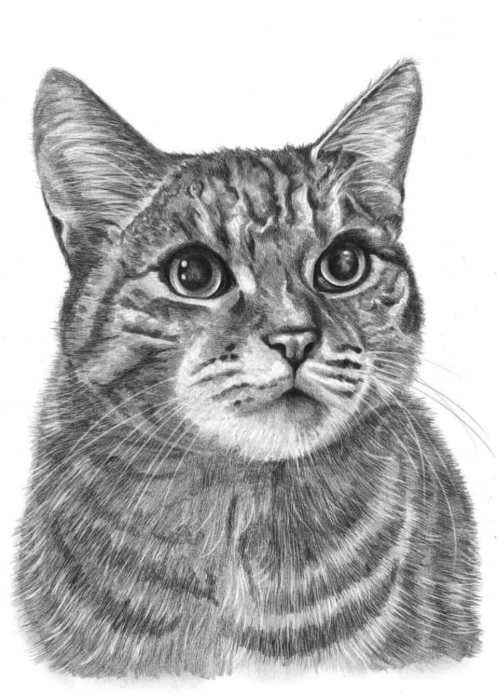 apprendre le dessin au crayon, idée de dessin chat noir et blanc à réaliser avec crayon sur papier blanc