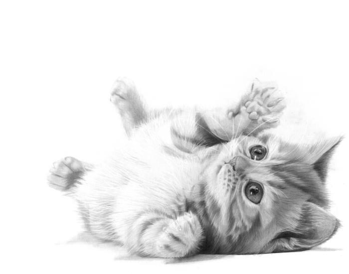 idée de dessin de chat mignon facile au crayon, exemple de joli dessin animal de compagnie en blanc et noir