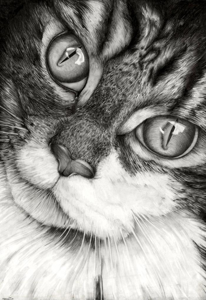 modèles de dessin de chat réaliste en blanc et noir pour pro, exemple de dessin animal de compagnie mignon