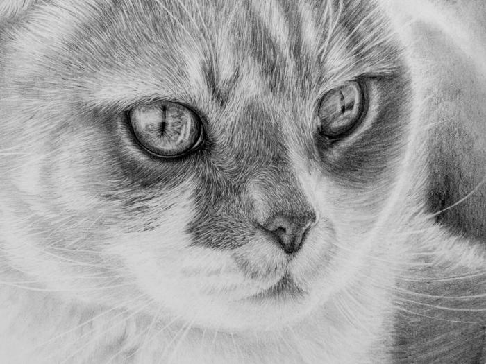 exemple de dessin de chat au crayon réaliste, comment faire un dessin animal de compagnie en blanc et noir réaliste