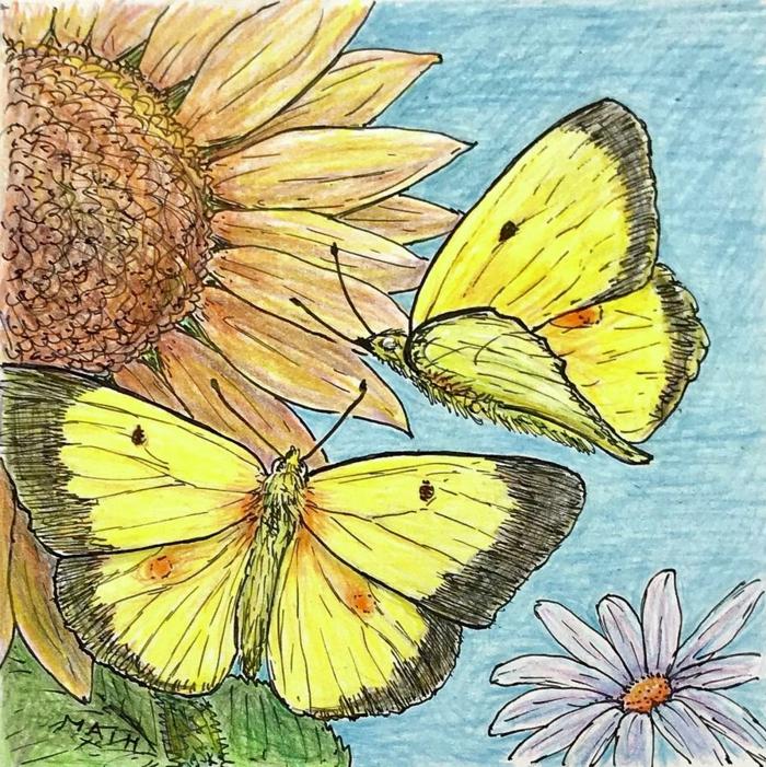 Deux papillons jaunes sur tournesol dessin de papillon magnifique, dessin facile a reproduire par etape
