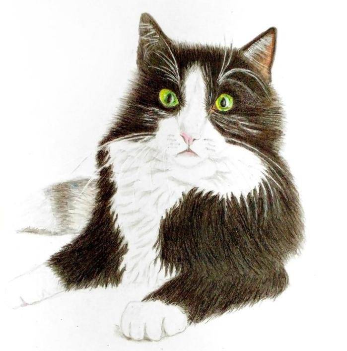 idée de dessin au crayon réaliste pour pros, comment faire la tete de chat dessin réaliste avec crayons