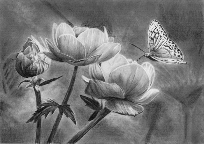 Magnifique dessin crayon noir, lumiere obscure coloriage de papillon, quel est le meilleur dessin a faire