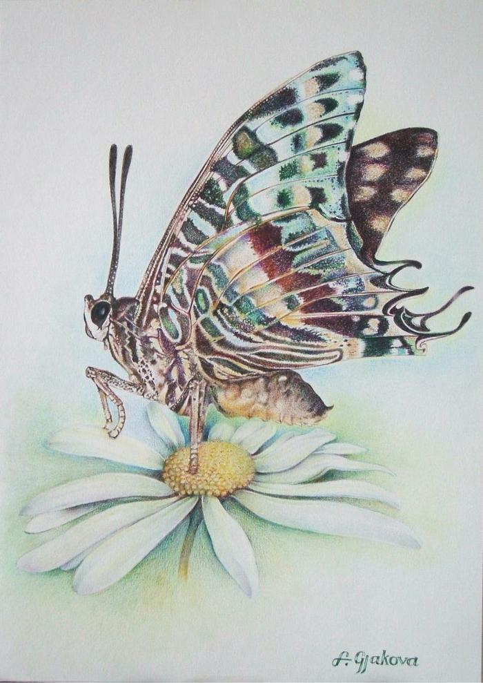 Papillon sur fleur marguerite dessin mignon, comment dessiner un joli papillon