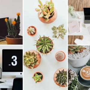 Plante de bureau : apporter une note naturelle et anti-stress dans son espace de travail