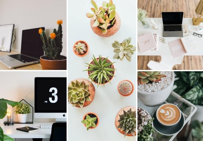 quelle plante d'intérieur originale choisir pour décorer son bureau à domicile, idée design moderne dans un coin de travail en blanc